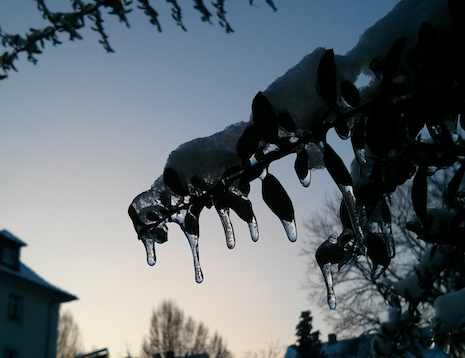 20120127_winterding